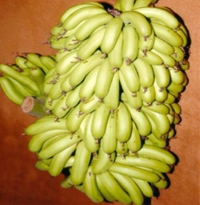 banana-crop-afterpesticides-result