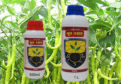 green-chilli-crop-diseases-pesticides