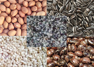 sell oil seeds online
