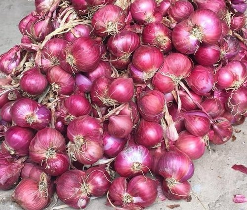 sell organic onion online